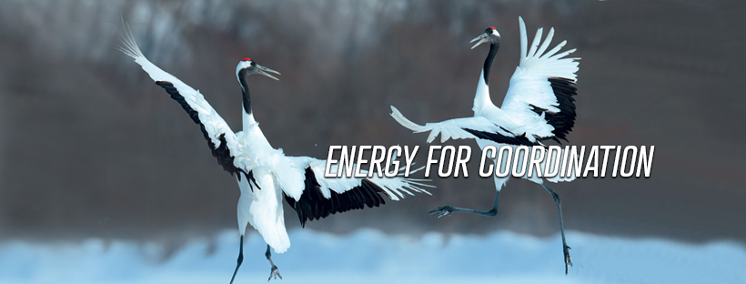 Finder energy for coordination